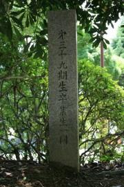 image_39