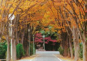 keyakisaka